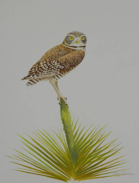 Burrowing Owl Painting - Perched by Alan Suliber