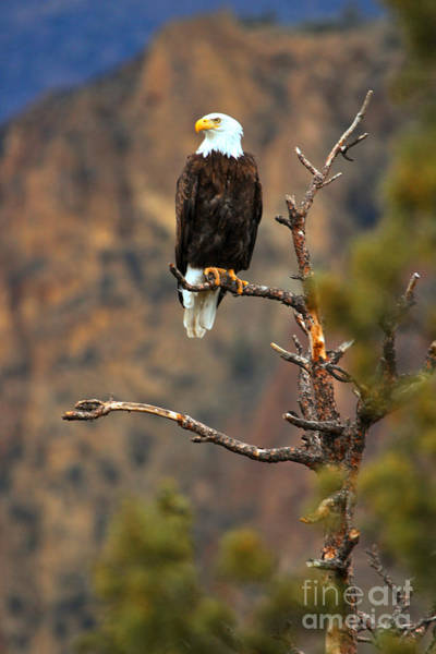 Photograph - Perched At Smith Rock by Adam Jewell