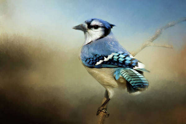 Wall Art - Photograph - Perched Blue Jay by Lana Trussell