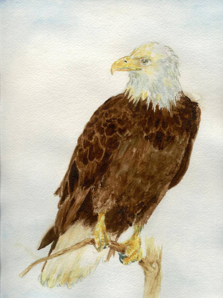 Painting - Perched Eagle by Andrew Gillette
