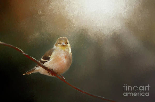 Wall Art - Photograph - Perched Goldfinch by Darren Fisher