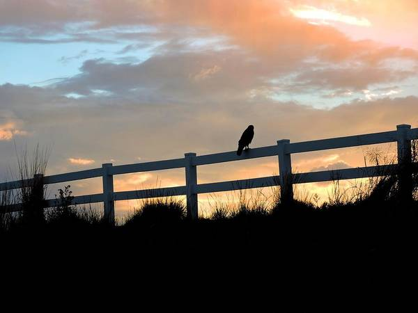 Arapahoe County Wall Art - Photograph - Perched Hawk by Connor Beekman