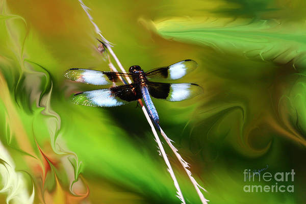 Painting - Perched by Lisa Redfern