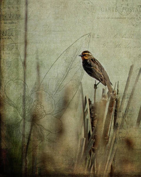 Perching Photograph - Perched On A Reed by Rebecca Cozart