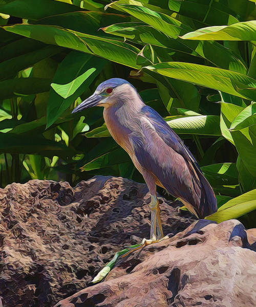 Photograph - Perched On The Rock by Pamela Walton