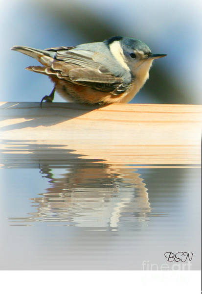 Photograph - Perched Over Water by Barbara S Nickerson