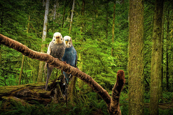 Photograph - Perched Parakeets by Randall Nyhof