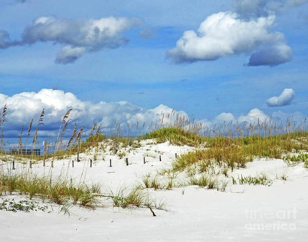 Photograph - Perdido Key Fl Dunes by Lizi Beard-Ward
