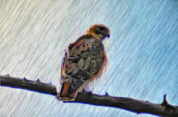Peregrine Photograph - Peregrine Falcon by Bill Cannon