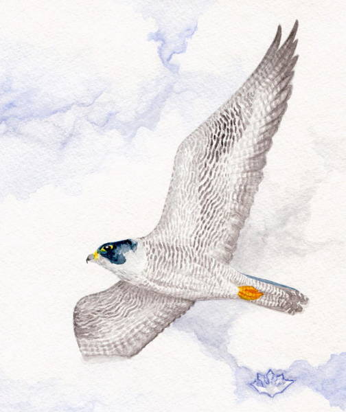 Painting - Peregrine Falcon by Harry Moulton