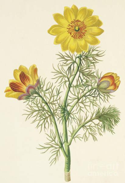Perennial Painting - Perennial Adonis by Pierre Puvis de Chavannes