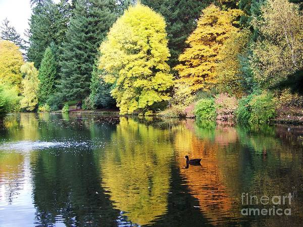 Photograph - Perfect Autumn Day by Julie Rauscher