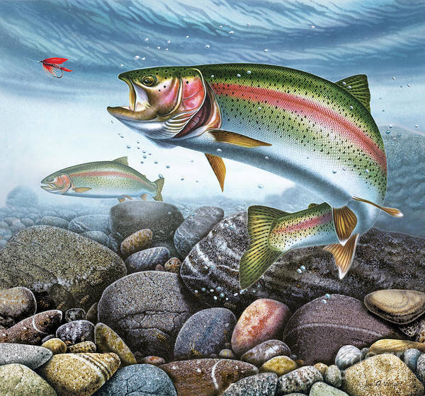 Painting - Perfect Drift Rainbow Trout by JQ Licensing