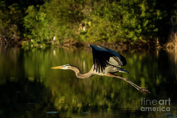 Wall Art - Photograph - Perfect Flight by Quinn Sedam