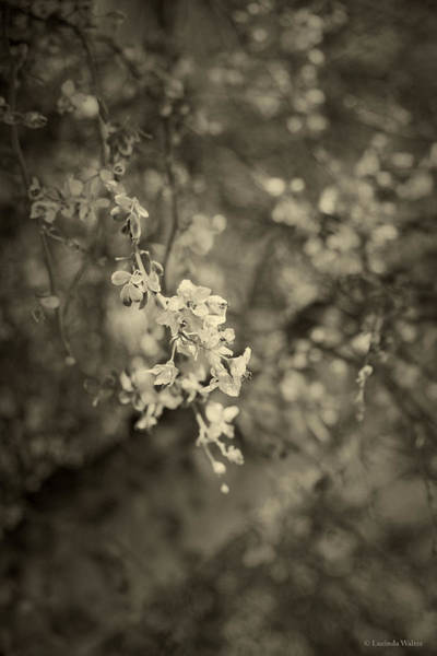 Photograph - Perfect Love by Lucinda Walter