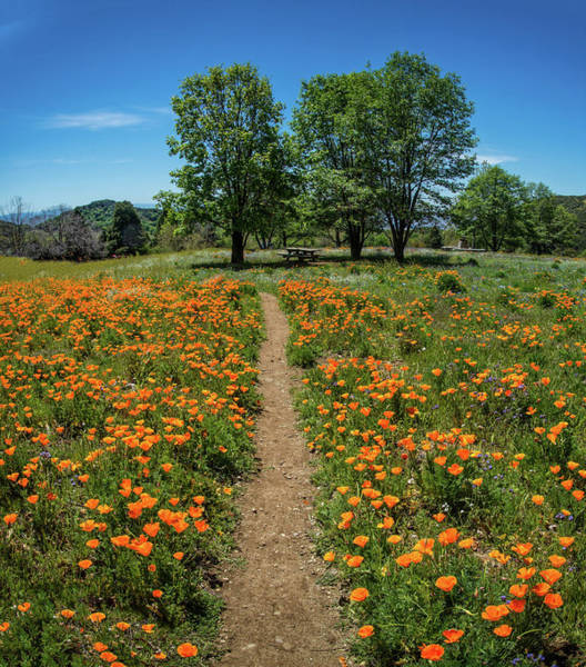 Photograph - Perfect Path Through The Poppies by Lynn Bauer