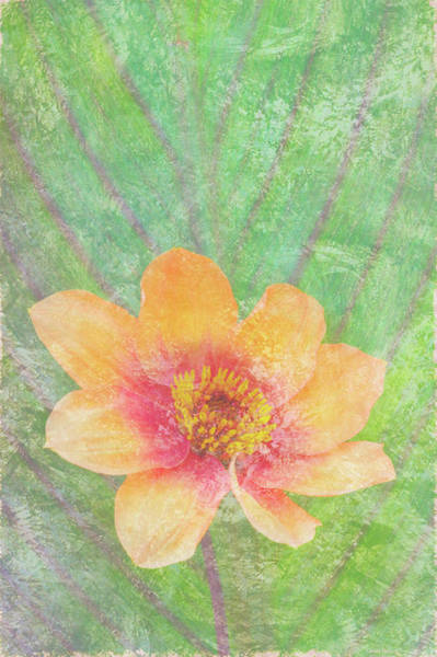 Peach Flower Wall Art - Painting - Perfect Peach by JQ Licensing