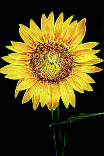 Photograph - Perfect Sunflower-fractalius by Don Johnson