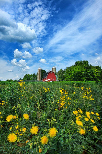 Photograph - Perfectly Summer by Phil Koch