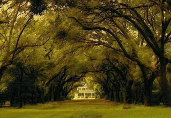 Perplexing Plantation Art Print