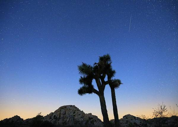 Photograph - Perseid Meteor Over Joshua Trees by M C Hood