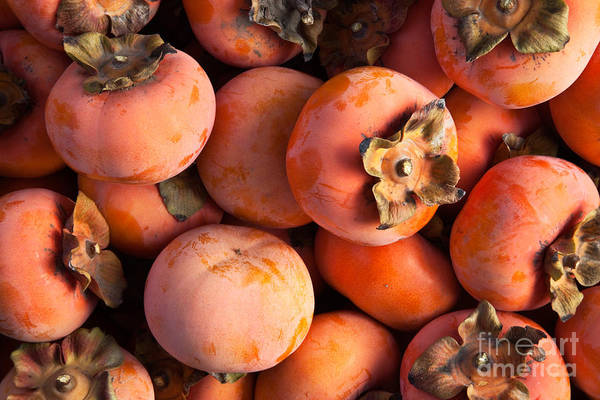 Wall Art - Photograph - Persimmon Harvest by Inga Spence