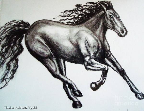 Drawing - Persistance by Elizabeth Robinette Tyndall