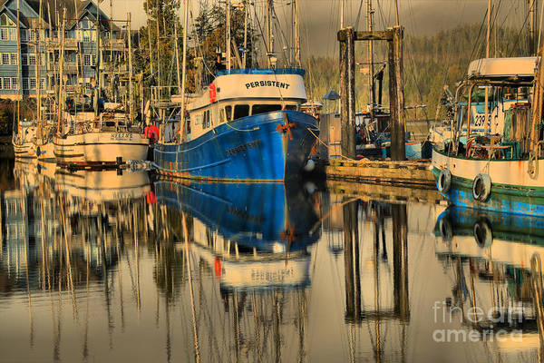 Port Of Vancouver Wall Art - Photograph - Persistent In Uclelet by Adam Jewell
