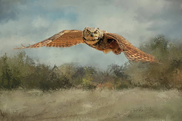 Owl In Flight Photograph - Perturbed 2 by Donna Kennedy