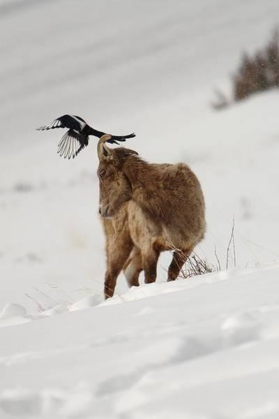 Photograph - Pesky Bird by David Andersen