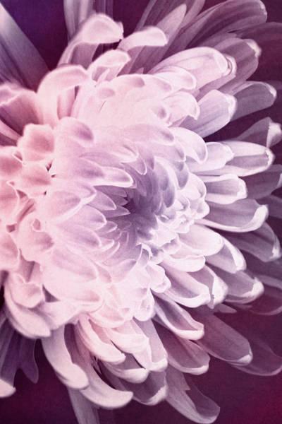 Photograph - Petal Grace by Leda Robertson