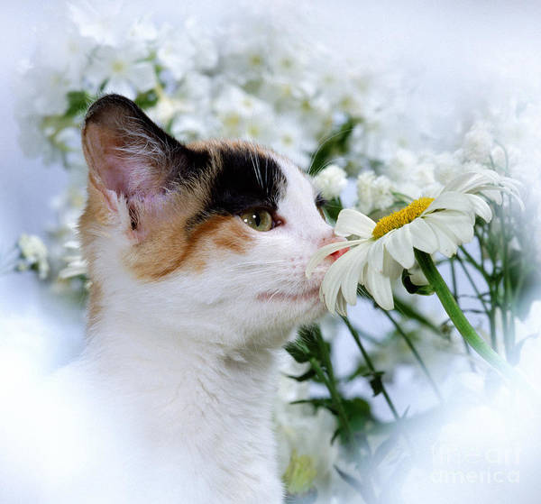 Photograph - Petal Sniffing Puss by Warren Photographic