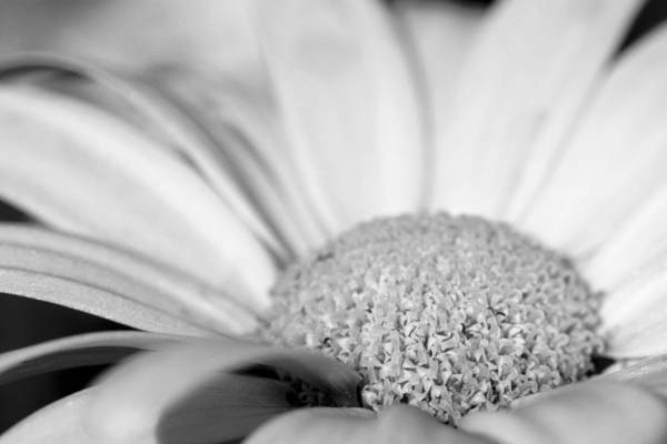 Photograph - Petals - Black And White by Angela Rath