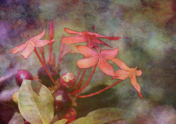 Photograph - Petals And Berries 8324 Idp_2 by Steven Ward
