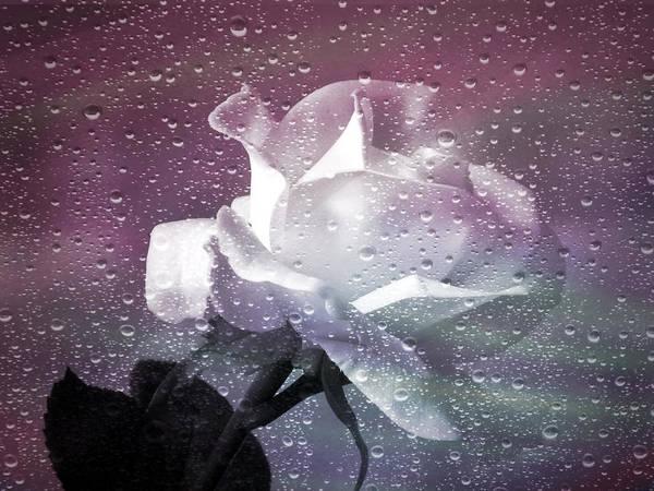 Petals And Drops Art Print