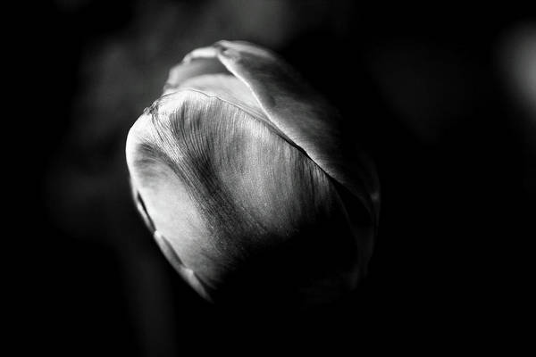 Photograph - Petals by Brian Pflanz