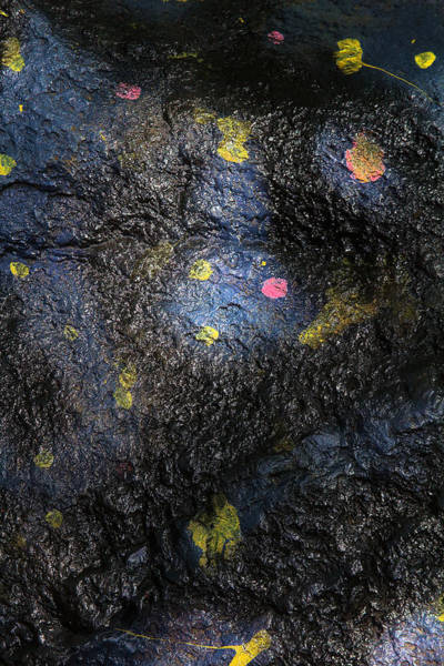 Photograph - Petals Glued To That Stone by Viktor Savchenko