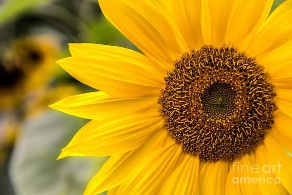 Photograph - Petals by Karin Pinkham