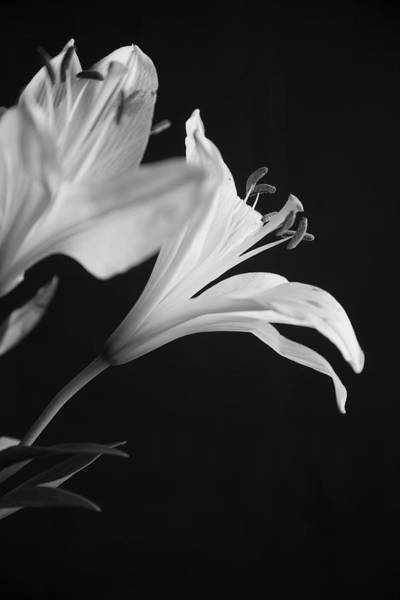 Photograph - Petals' Light by Eric Christopher Jackson