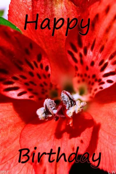 Photograph - Petals Of Red Happy Birthday by Lisa Wooten