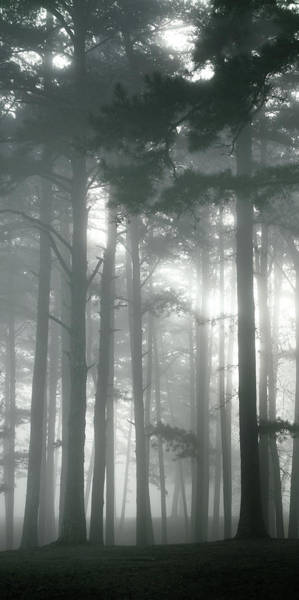Photograph - Petit Jean Fog Triptych Panel No.2 by Bud Simpson