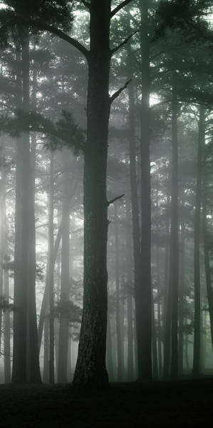 Photograph - Petit Jean Fog Triptych Panel No.3 by Bud Simpson