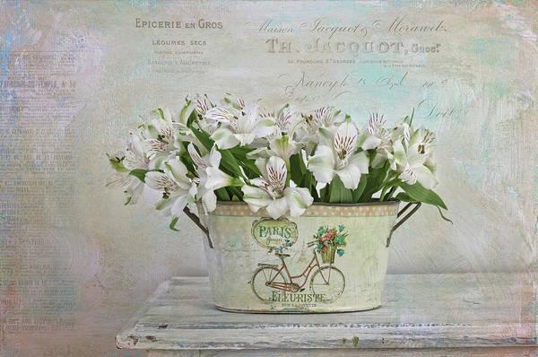 Alstroemeria Photograph - Petite Fleurs by Kim Hojnacki
