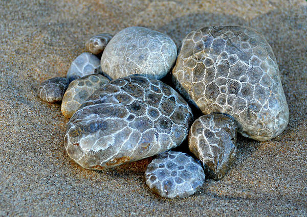 Photograph - Petoskey Stones by SimplyCMB