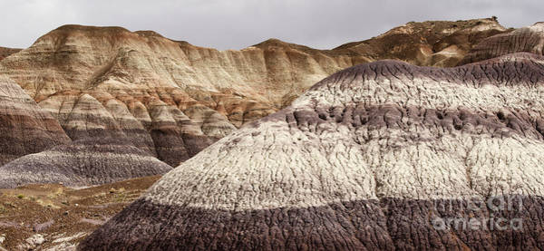 Petrified Logs Photograph - Petrified Forest National Park 1 by Bob Christopher