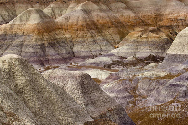 Petrified Logs Photograph - Petrified Forest National Park 4 by Bob Christopher