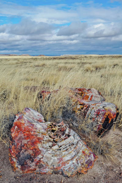 Photograph -  Petrified Forest National Park Log by Kyle Hanson