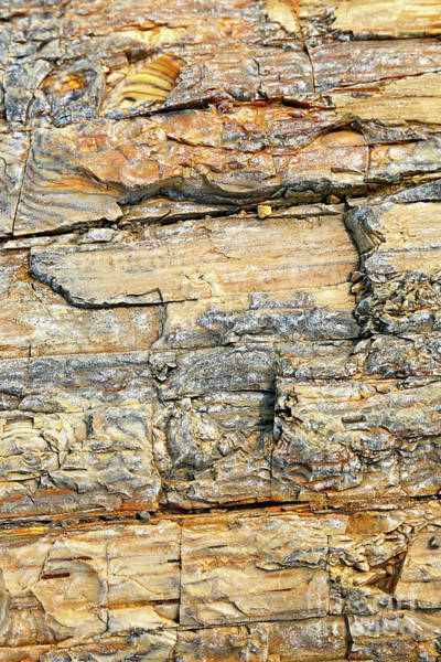 Petrified Logs Photograph - Petrified Wood Nature Abstract by Carol Groenen