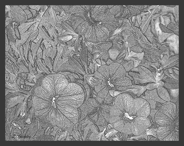 Wall Art - Drawing - Petunias by Lessandra Grimley