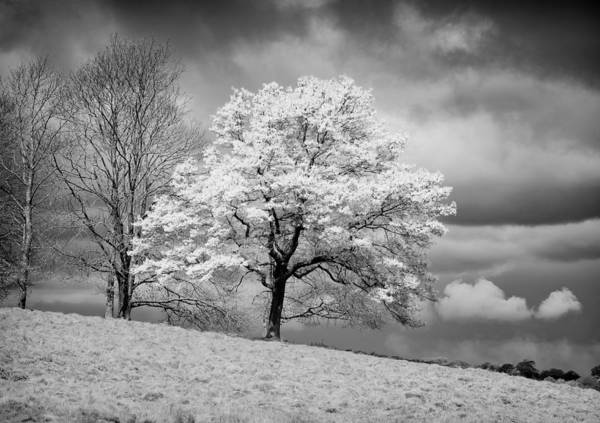 Photograph - Petworth Tree by Michael Hope